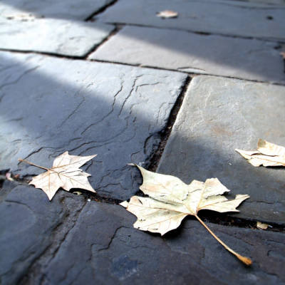 leaves_on_ground